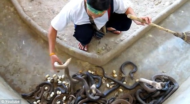 Man Cleaning out the snake pit
